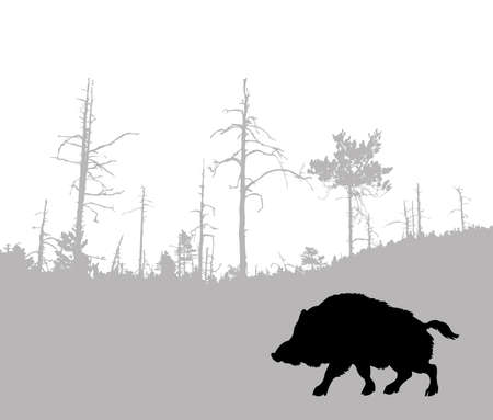 silhouette of the wild boar photo
