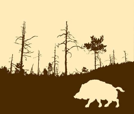silhouette of the wild boar Stock Photo - 7780562