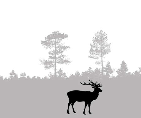 dignified: silhouette of the deer