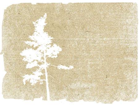 cedar: grunge background