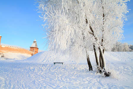tree in snow against old fortress photo