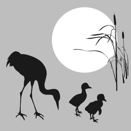 bulrush:   illustration of the crane with nestling on background sun