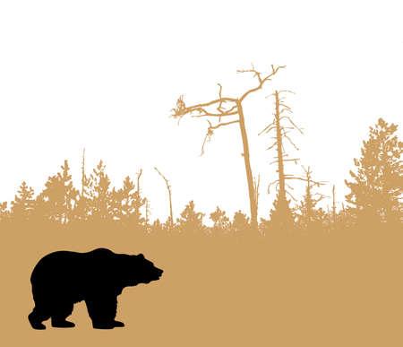 cedar tree:  silhouette bear    Illustration