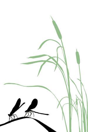 rietkraag:  silhouet twee libellen op kruid Stock Illustratie