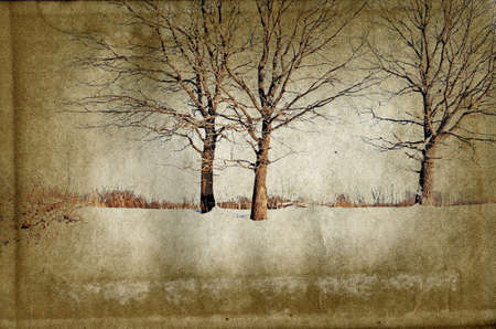 silhouette wood on grunge background photo