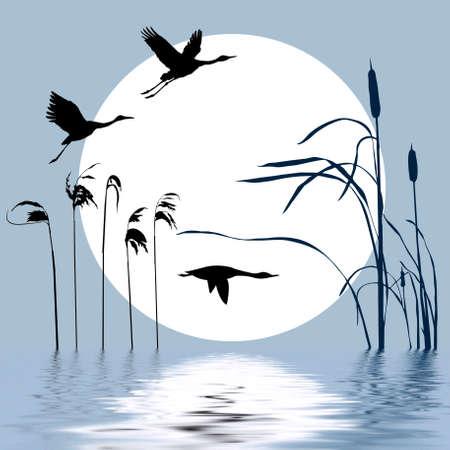rietkraag: tekening vogels vliegen op achtergrond zon