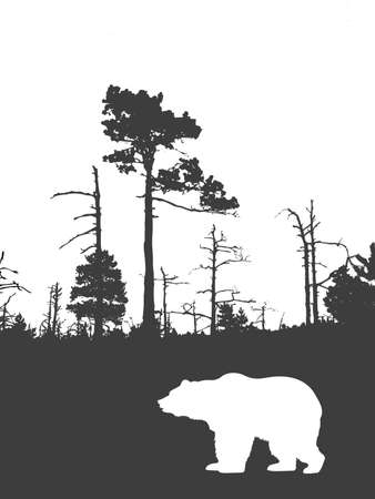 silhouette bear on background wild wood    Vector