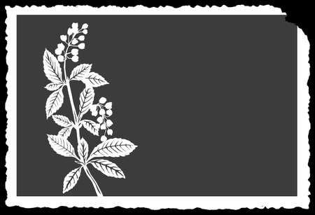 flowerses: vector drawing of the plant