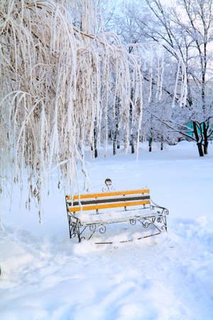 aging bench in winter park photo