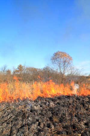 fire on autumn field photo