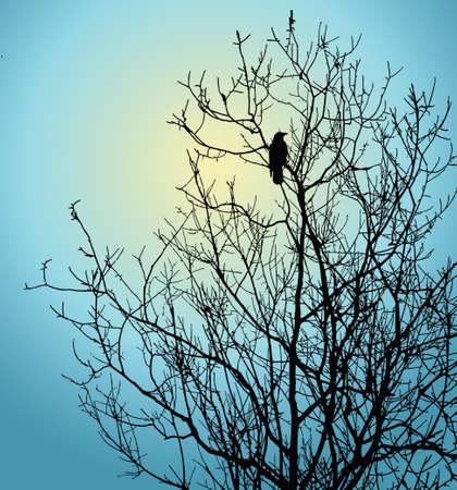 lonely bird: bird on tree on background winter sky  Stock Photo