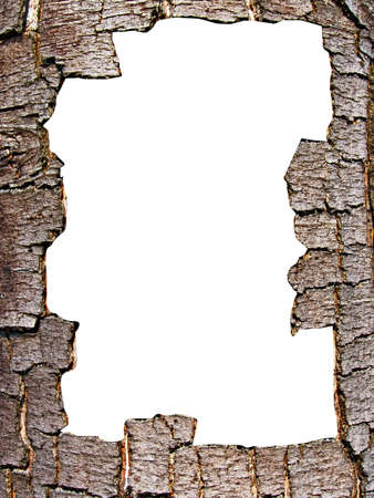 cortex: vector decorative frame from cortex tree