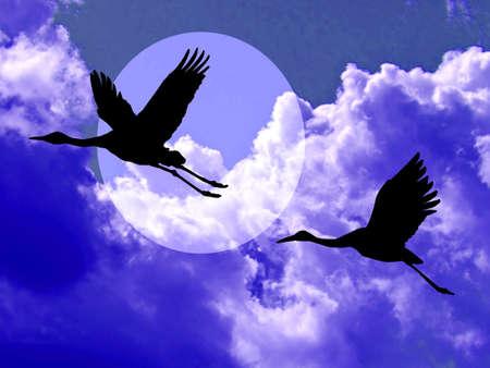 crane in cloudy sky  photo