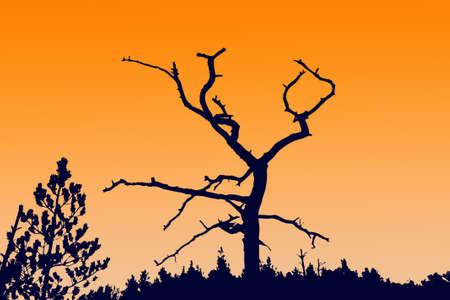 perish:  silhouette dry tree