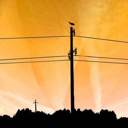 silhouette of the crane photo