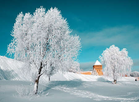 tree in snow  photo