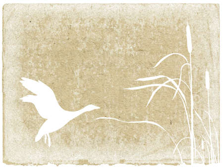 pantanos: Fondo de grunge