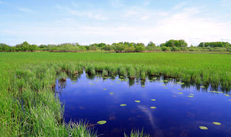 small lake on spring field Stock Photo - 8427951