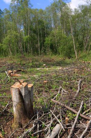 chopping wood Stock Photo - 8768516