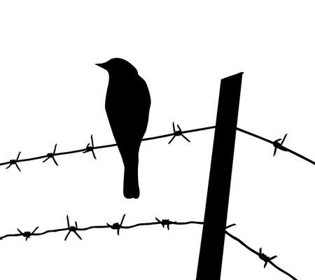 silhouette of the bird on barbed wire Stock Vector - 8768595