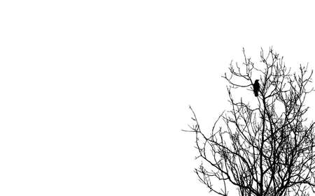 crows: ravens on branch on white background
