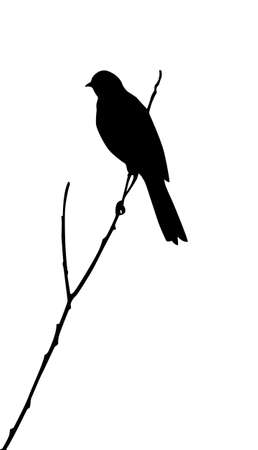 branches silhouette: silhouette of the bird on white background