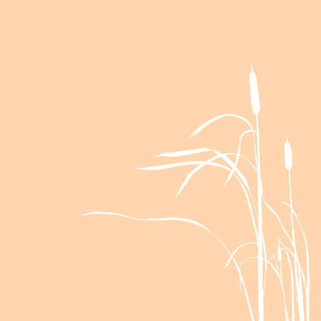 bulrush: silhouette of the reed isolated on brown background