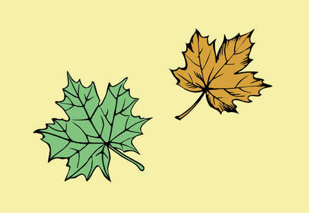 silhouette of the maple leaf on yellow background Vector