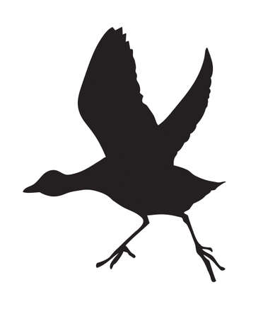 vector silhouette of the bird on white background