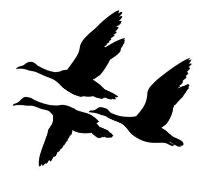 アヒル: 白い背景の上にアヒルを飛んでベクトル シルエット