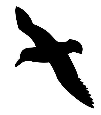 vector silhouette of the sea bird on white background Vector