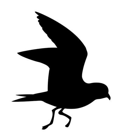 vector silhouette of the wild bird on white background Illustration