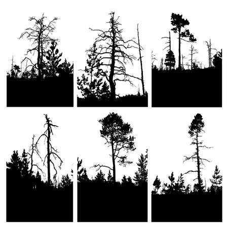 pine tree silhouette: vector silhouettes tree on white background Illustration