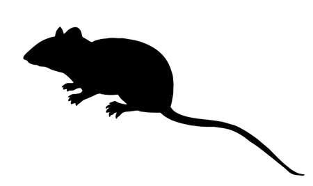 maus cartoon: Vector Silhouette Maus auf wei�em Hintergrund Illustration