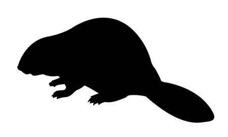 vector silhouette beaver on white background Stock Vector - 8986254