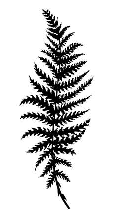 ferns: vector silhouette sheet fern on white background Illustration