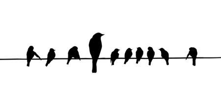 migrating animal: vector silhouettes of the birds on wire