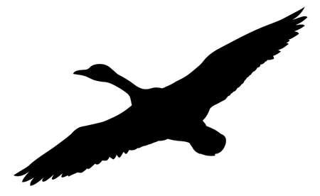 gansos: silueta patos voladores sobre fondo blanco Vectores