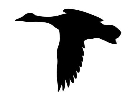 duck hunting: silhouette flying ducks on white background