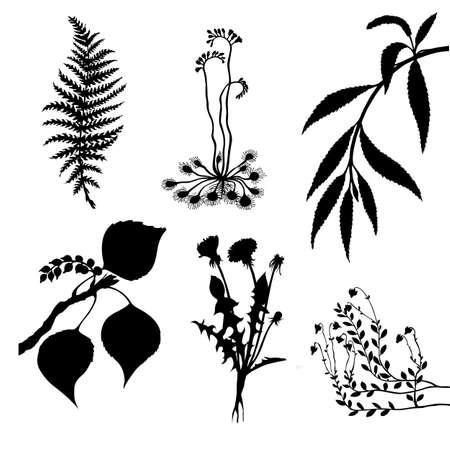 conjunto de vector de las plantas sobre fondo blanco