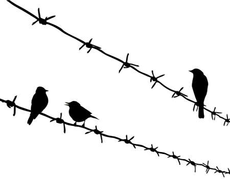 vector silhouette three birds on barbed wire Vector