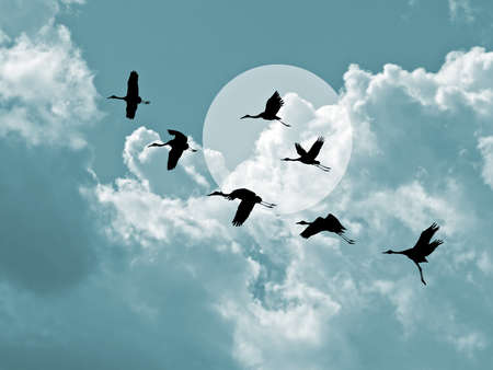 silhouette flying cranes on cloudy background photo