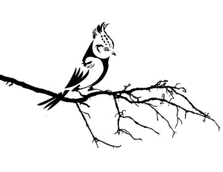 tomtit: vector silhouette of the bird on branch