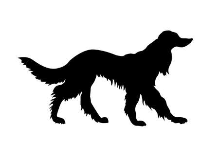 shaggy dog: vector silhouette pointer on white background