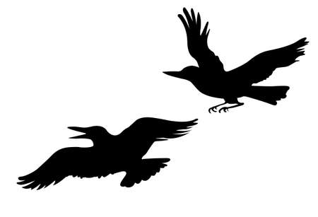 cartoon birds: vector drawing two ravens on white background