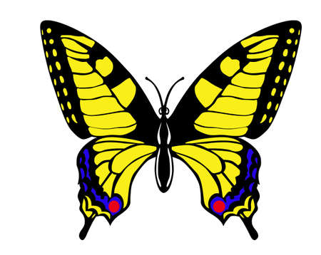 swallowtail: vector drawing butterfly swallowtail on white background