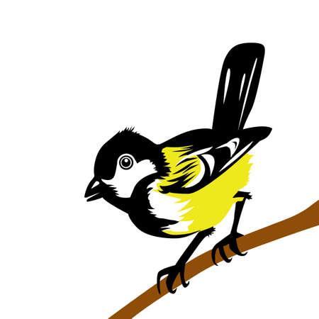 tomtit: drawing tomtit on white background