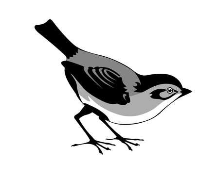 silhouette de l'oiseau sur fond blanc