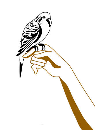 silhouette of the parrot on hand Vector
