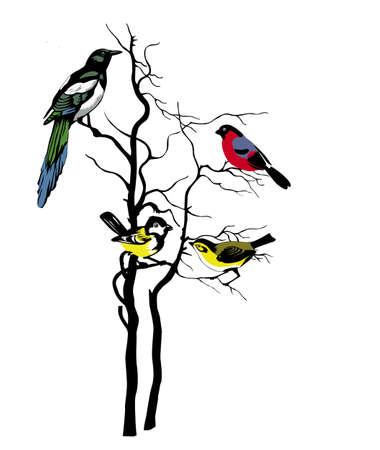 birds in tree: silhouette of the birds on tree